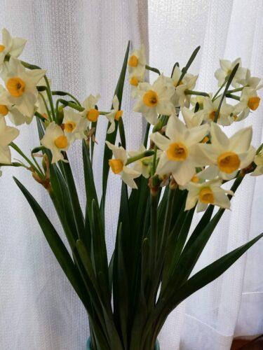 1月に咲いている草花