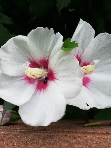 7月に咲いている花木