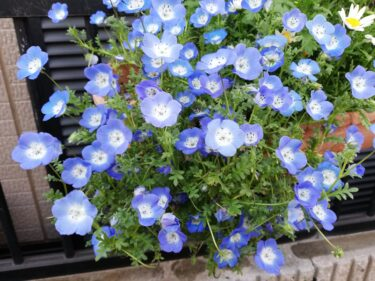 4月に咲いている草花