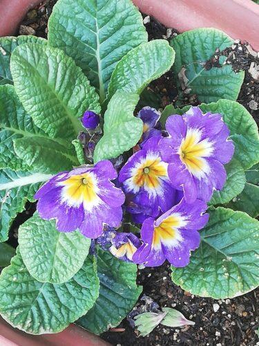 2月に咲いている草花