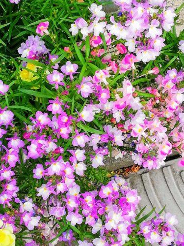 5月に咲いている草花