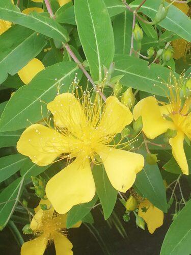 6月に咲いている花木
