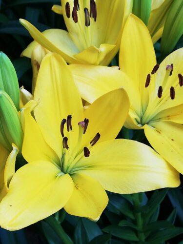 6月に咲いている草花