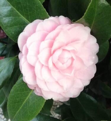 花ごよみ、1月に咲いている花木