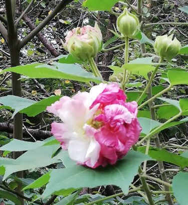 9月に咲いている花木